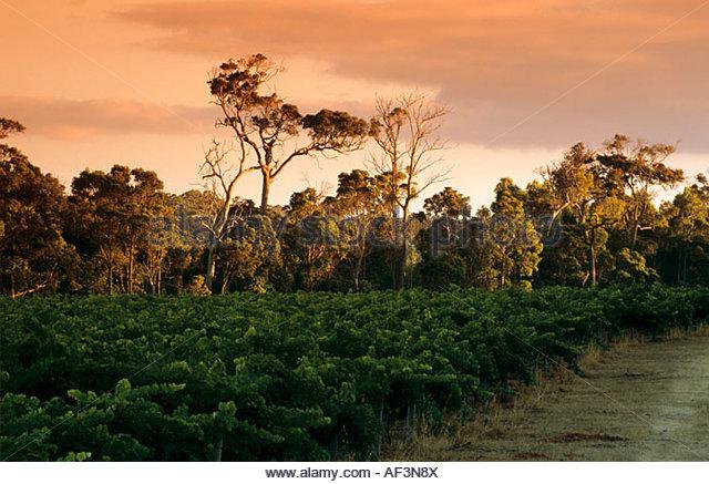Margaret river australia wine