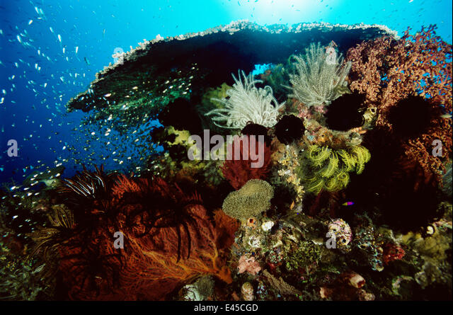 Coral Reef Fish Different Stock Photos Coral Reef Fish