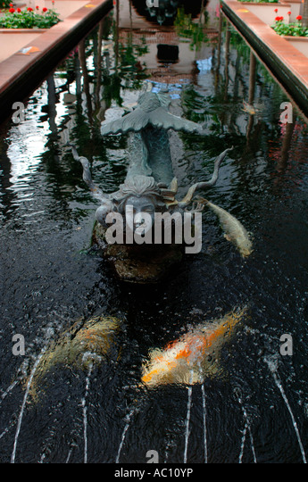 Freshwater angelfish stock photos freshwater angelfish for Koi pool blackpool