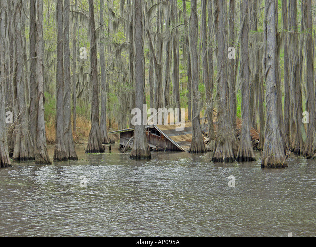 Submerged Cabin Shoreline Caddo Lake   Stock Image
