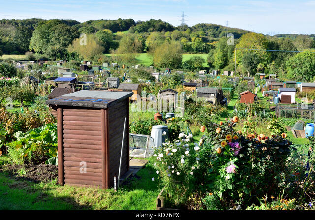 english allotment gardens with typical garden sheds and growing flowers and vegetables market town of