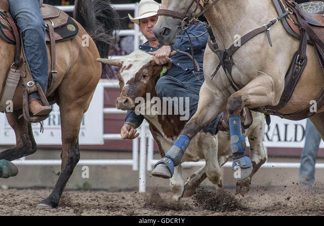 Cattle Stampede Stock Photos Amp Cattle Stampede Stock
