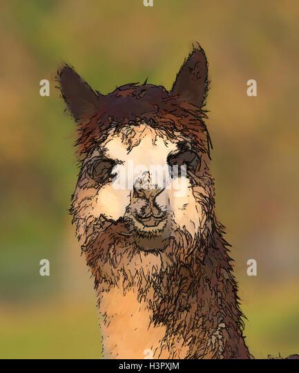 Llama Art Stock Photos & Llama Art Stock Images - Alamy