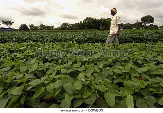 sustainable agriculture in india pdf