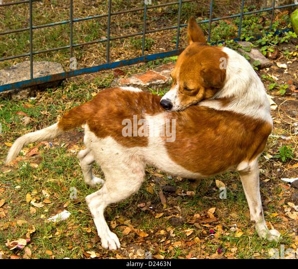 Dog Flea Collar Inflammation
