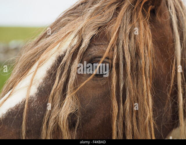 long manes stock photos - photo #21