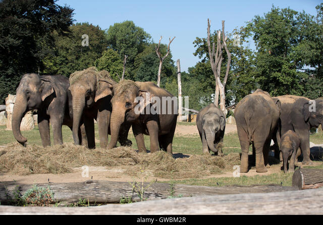 Elephants foot tree stock photos elephants foot tree for Designhotel elephant prague 1 czech republic