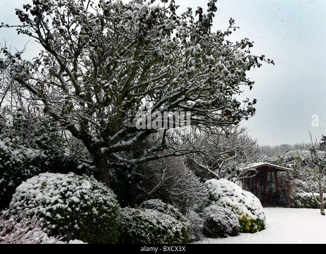 Bushes england stock photos bushes england stock images for Garden trees england