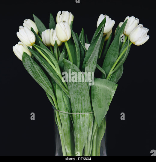 Tulips In Container Stock Photos & Tulips In Container ...