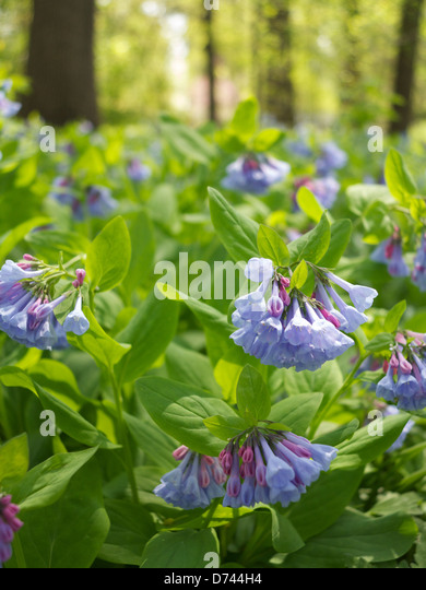 Wildflowers Spring Springtime Vernal Stock Photos