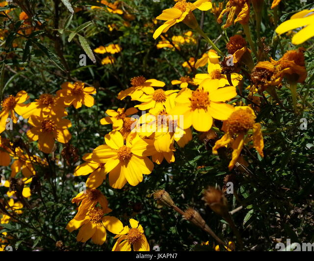 Yellow flower with brown center stock photos yellow flower with yellow flower with brown center stock image mightylinksfo