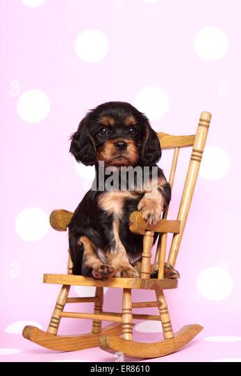 rocker dog stock photos rocker dog stock images alamy. Black Bedroom Furniture Sets. Home Design Ideas