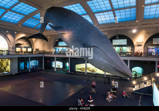 Museum Of Natural History Tuscaloosa
