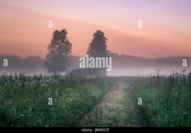 Landscape with mist and fog at summer night in northern Europe - Stock Image