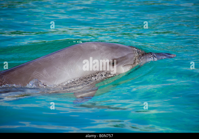 Baby Dolphin Swimming With Mother Stock Photos & Baby ...