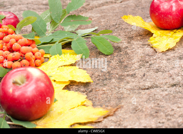 ... background of old weathered wooden surface with fallen foliage in fall