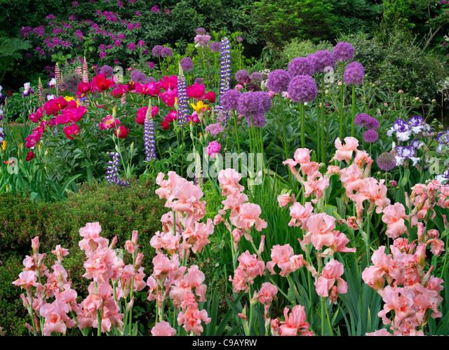 Schreiners Iris Gardens Stock Photos Schreiners Iris