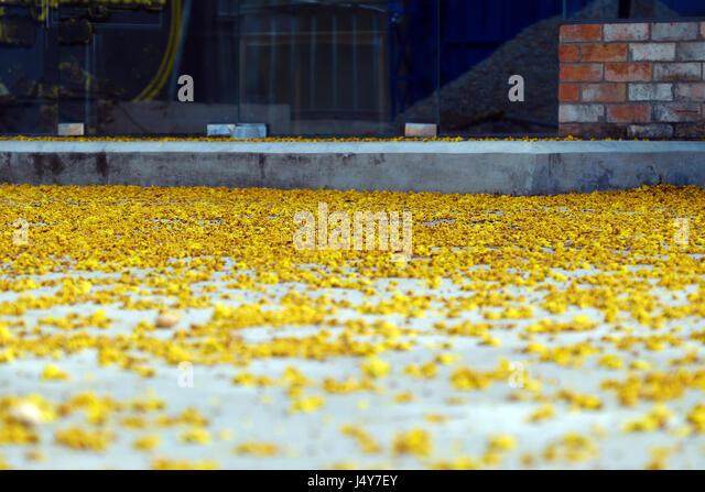 Petals On Floor Stock Photos Amp Petals On Floor Stock