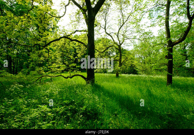 Pleasant Arboretum And Gardens Stock Photos  Arboretum And Gardens Stock  With Lovely The Arboretum With Trees And Grass At Berlin Botanical Garden In Dahlem  Berlin Germany With Alluring Beaulieu Gardens Also Mini Fencing Garden In Addition Garden Room Designs And Raised Garden Bed For Patio As Well As Railway Sleeper Garden Bench Additionally Shikoku Garden From Alamycom With   Lovely Arboretum And Gardens Stock Photos  Arboretum And Gardens Stock  With Alluring The Arboretum With Trees And Grass At Berlin Botanical Garden In Dahlem  Berlin Germany And Pleasant Beaulieu Gardens Also Mini Fencing Garden In Addition Garden Room Designs From Alamycom