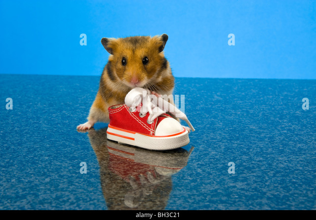 funny hamster pictures for kids - photo #30