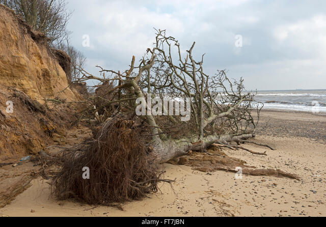 the cause of effect of beach erosion Humans said have huge impact on erosion people cause erosion at a rate 10 to 15 times faster  the net effect of both changes is a 44 percent.