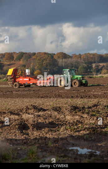 Staffordshire Uk 10th November 2012 A Tractor And A Potato Harvester Are Seen