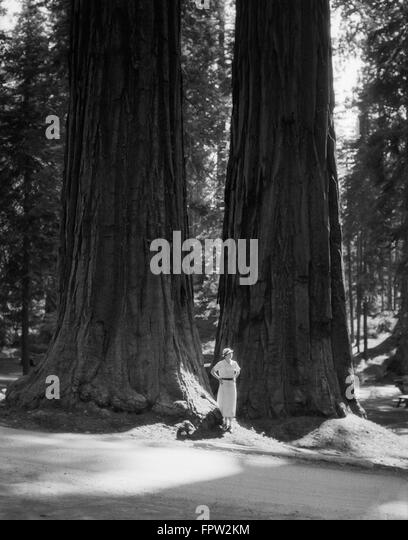 sequoia national park hindu single women Sequoia/kings canyon national parks or san canyon national parks or san francisco by going directly to the sequoia national park forum in the.