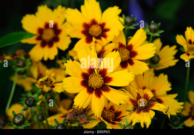 Yellow flower red center choice image flower decoration ideas yellow flower with red center choice image flower decoration ideas yellow flower with red center gallery mightylinksfo