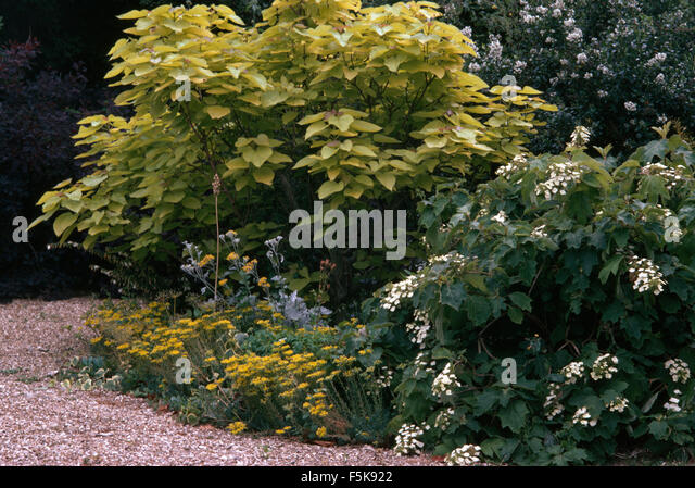 Shrub border stock photos shrub border stock images alamy for Low growing flowering shrubs