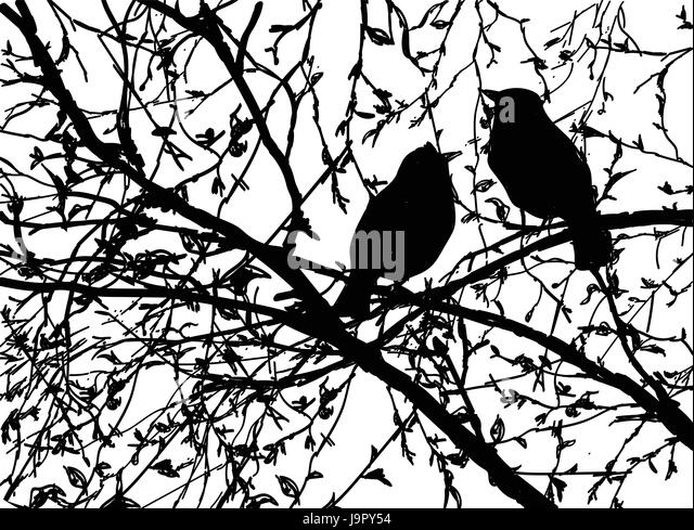 Vector Silhouettes Of Birds At Branch Tree Hand Drawn Bird Sitting On Isolated