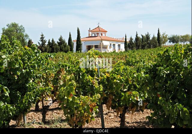 Explore Spanish Wine Country - Spanish Wine Country