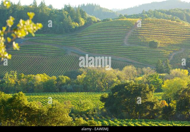 Beautiful Northern California Drop Top: Beautiful Views Of The Vineyards In The Famous Napa Valley