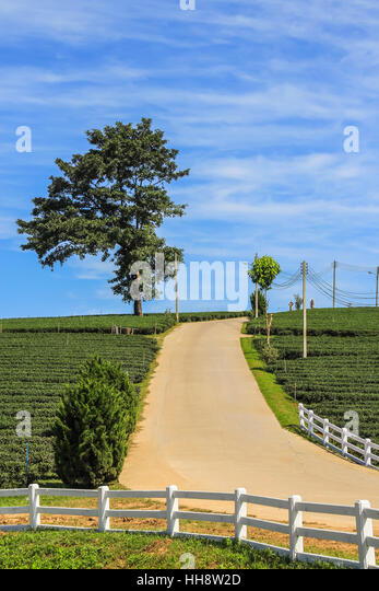 Plantation Road Stock Photos Plantation Road Stock Images Alamy