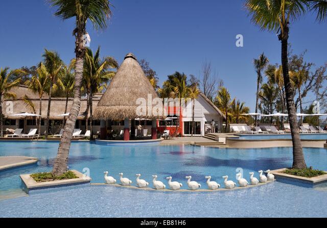 Dodo mauritius stock photos dodo mauritius stock images for Swimming pool mauritius