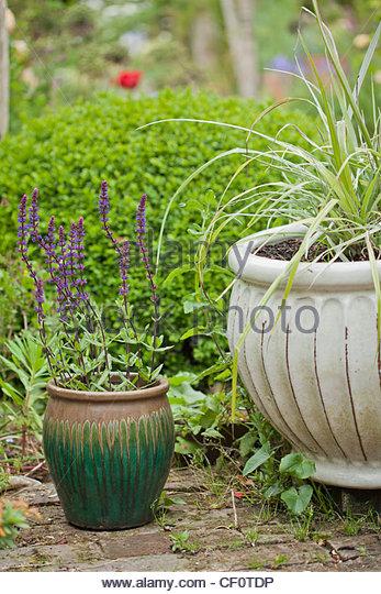 Ornamental grasses pot stock photos ornamental grasses for Tall grasses for pots