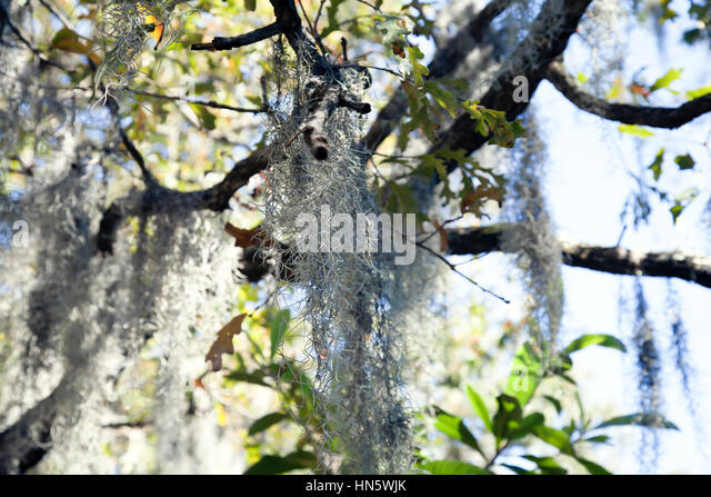 Louisiana Antebellum Stock Photos & Louisiana Antebellum ...