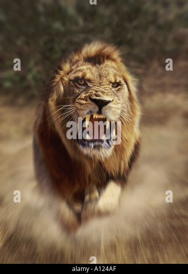 Angry Cats Stock Photos Amp Angry Cats Stock Images Alamy