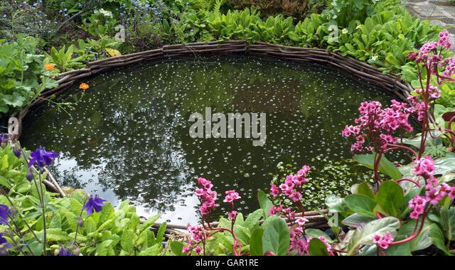 Oxygen bubbles stock photos oxygen bubbles stock images for Oxygenating plants for garden ponds