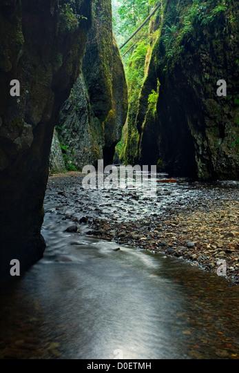 Rain forest slots