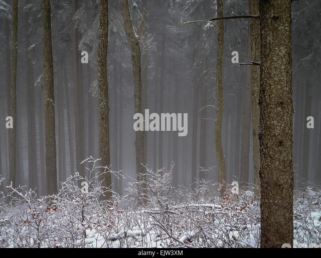 mysterious forest in winter - photo #8