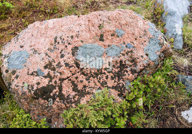 Red Granite Boulder : Lichens on boulder stock photos