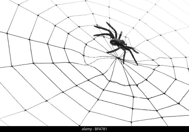black and white spider stock photos  u0026 black and white spider stock images