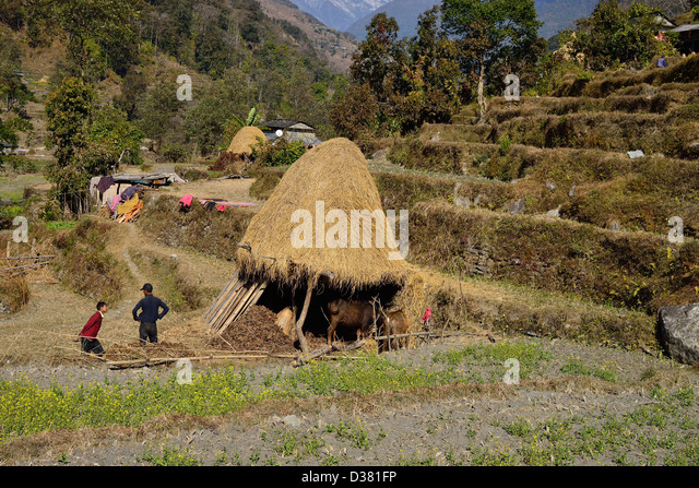 Subsistence Farming Stock Photos & Subsistence Farming ...