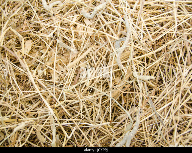 Haylage Stock Photos Amp Haylage Stock Images Alamy