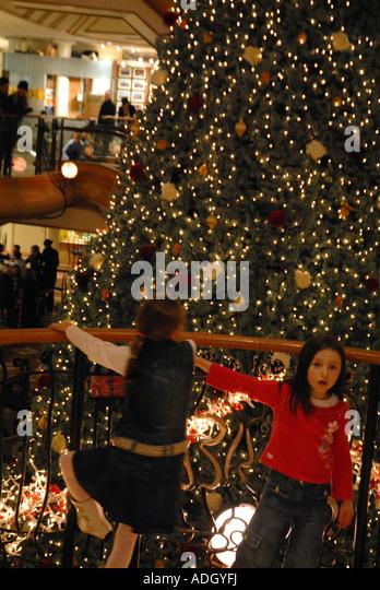 living christmas tree 2013 new glasgow
