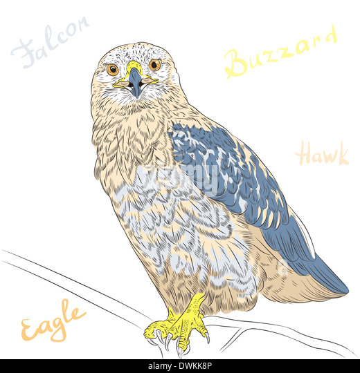 sketch funny cartoon colorful bird rough legged buzzard stock image