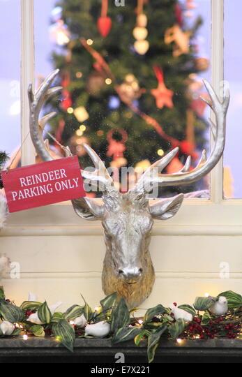Reindeer Christmas Uk Stock Photos  Reindeer Christmas Uk Stock