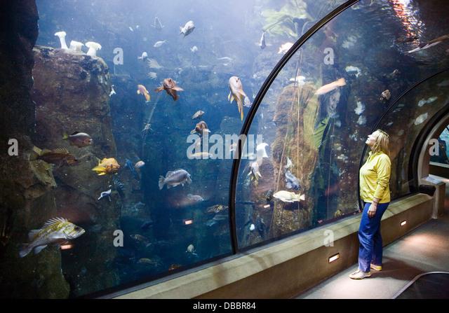 Newport Aquarium Oregon Stock Photos Newport Aquarium