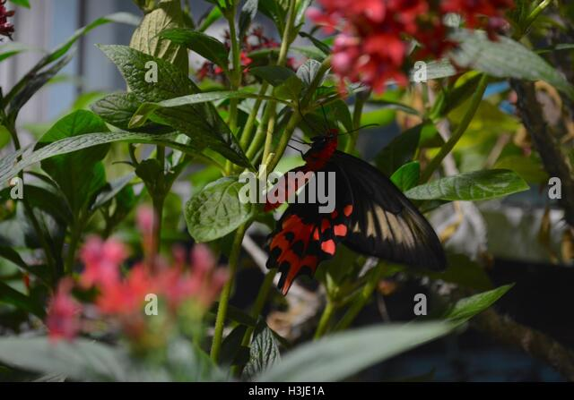 A Butterfly On Flowers In The Butterfly Garden In The Museum Of Science In  Boston,
