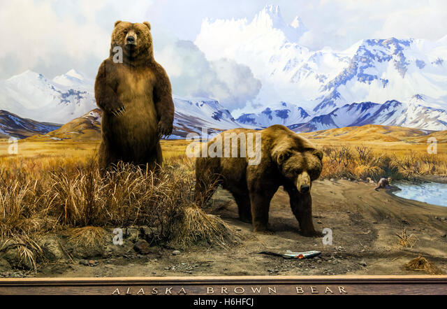 Grizzly Bear At The Natural History Museum In Ny